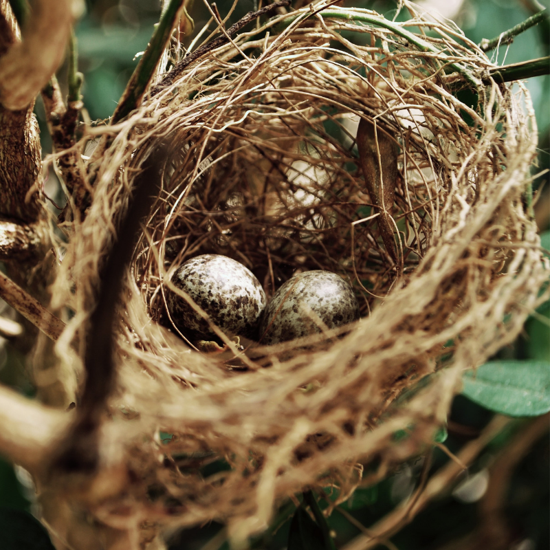 accurate-pest-control-management-birds-nest (1).png