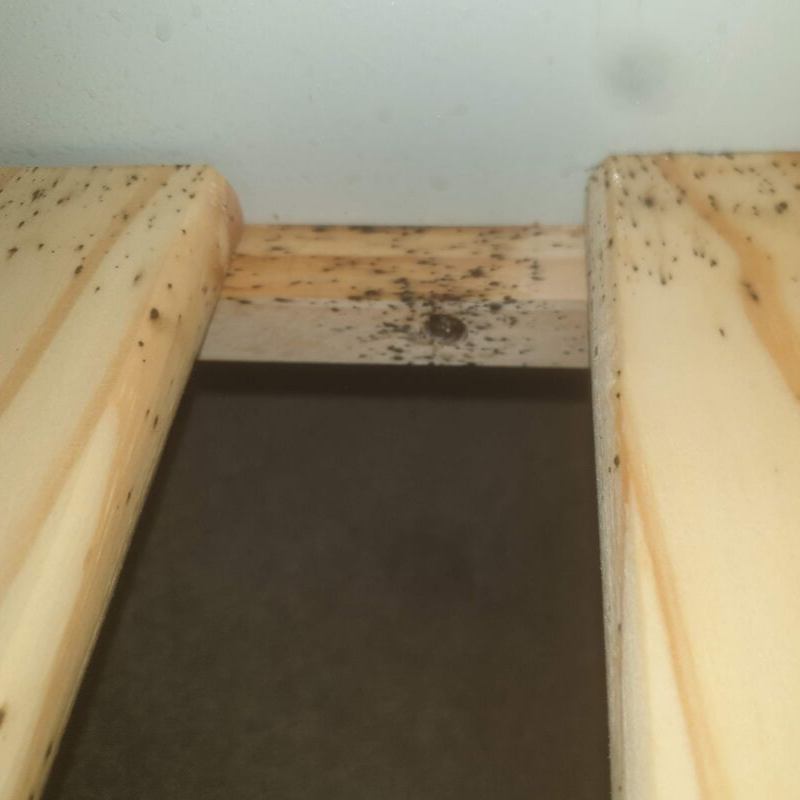 Damage caused by Bed Bugs