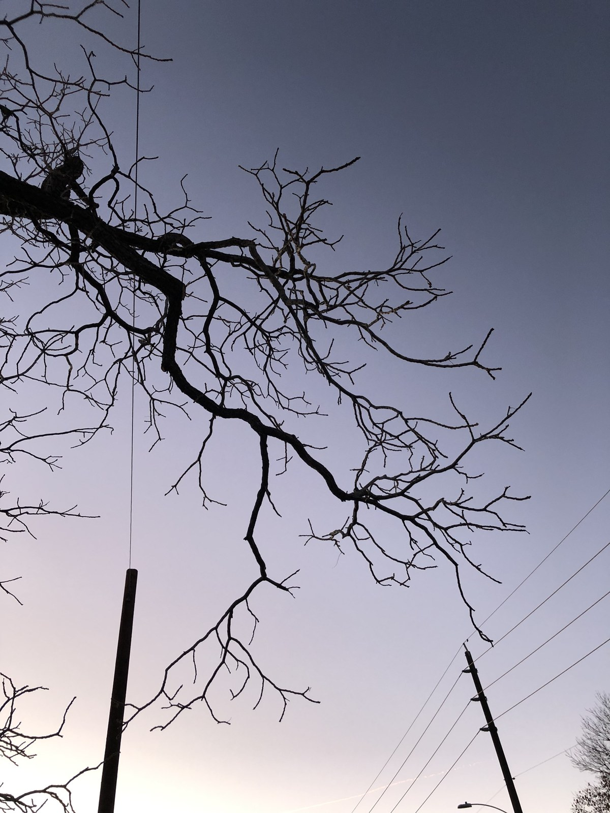 branches for blog.jpg