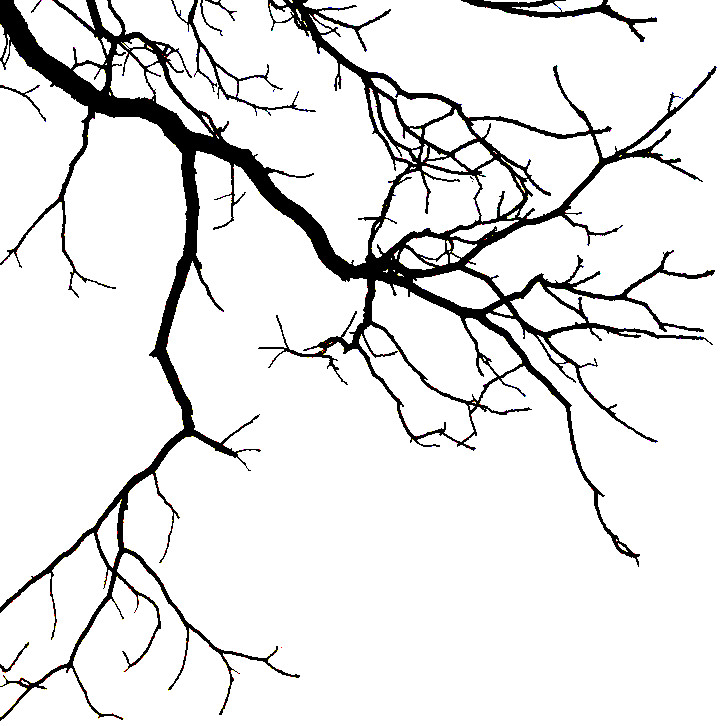 branches for blog step 3.jpg