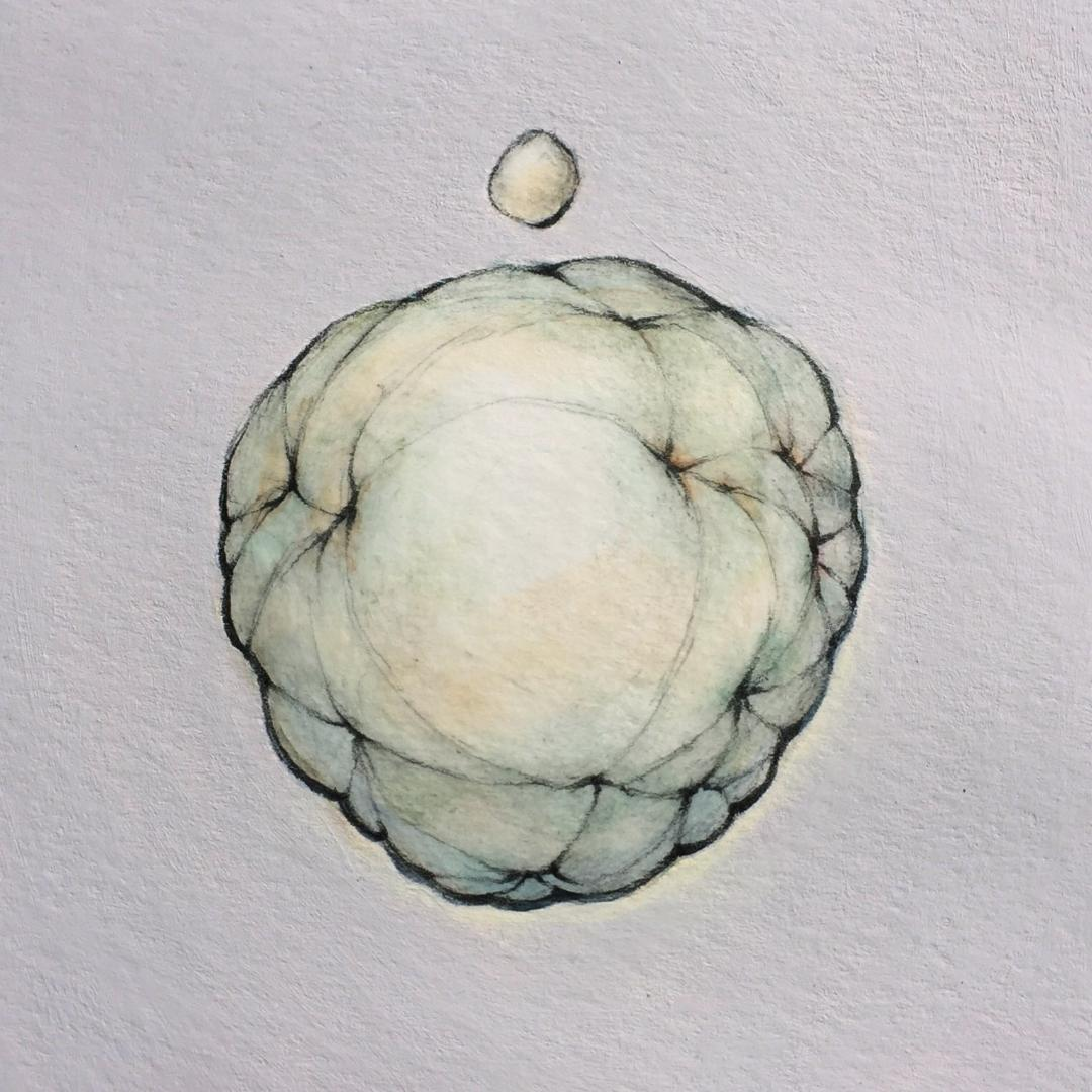 "Small Ovoid Over Large Ovoid   9"" x 9"" - 2019"