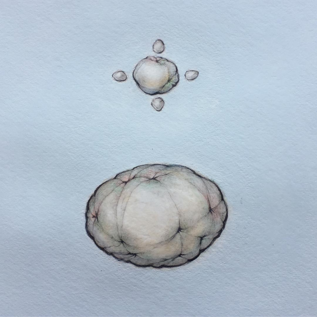 "Small Ellipsoid with Four Ovoids Over Large Ellipsoid   9"" x 9"" - 2019"