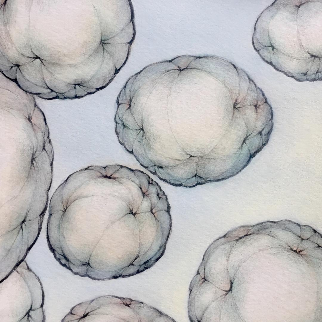 "Spheroids and Ellipsoids   9"" x 9"" - 2019"