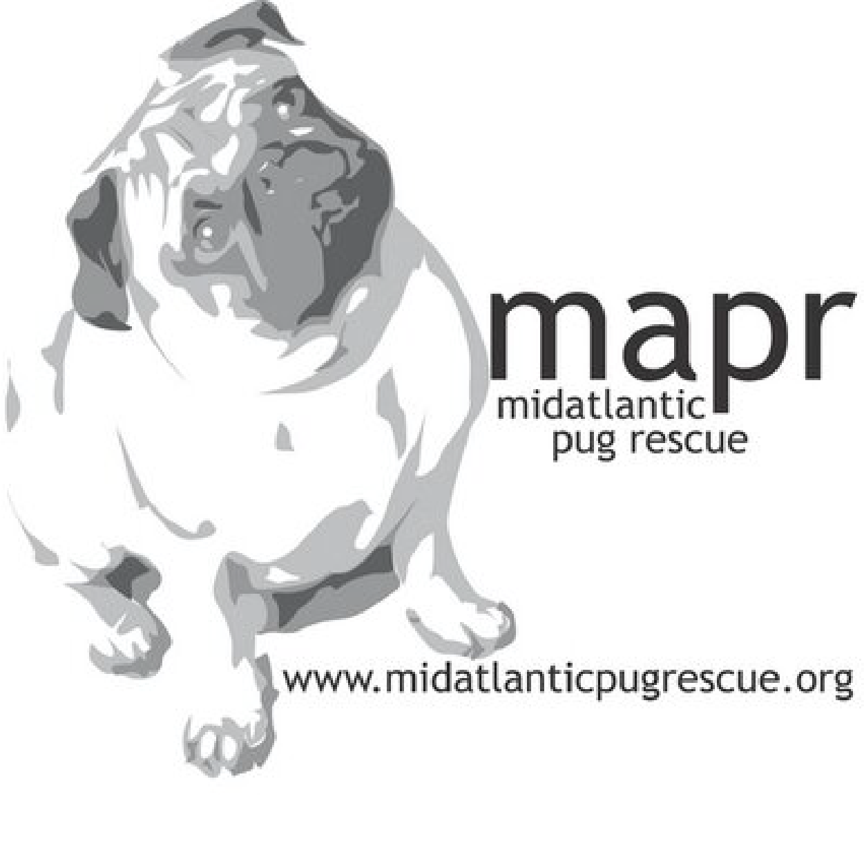 Mid Atlantic Pug Rescue is a nonprofit organization, dedicated to providing for the short and long term needs of abandoned or surrendered pugs. -