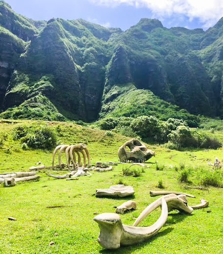 The filming location of Kong Skull Island!