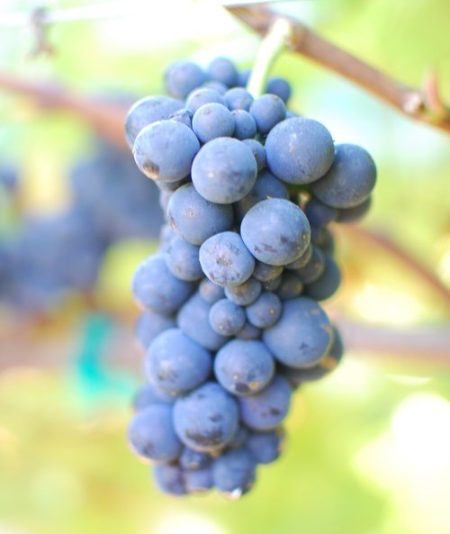 grape-close-up.jpg