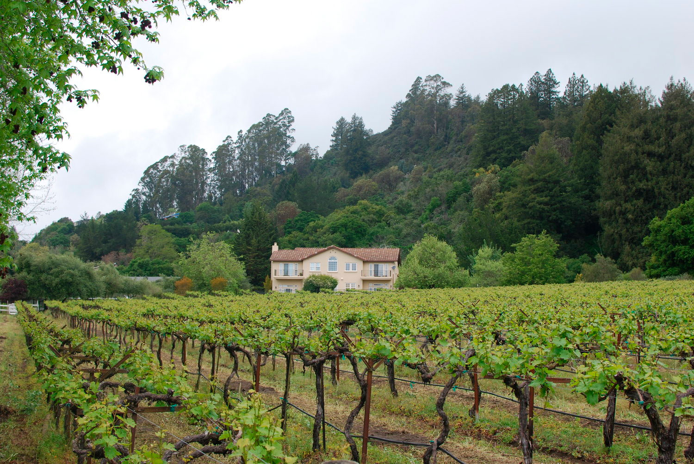 vineyard-estate.jpg