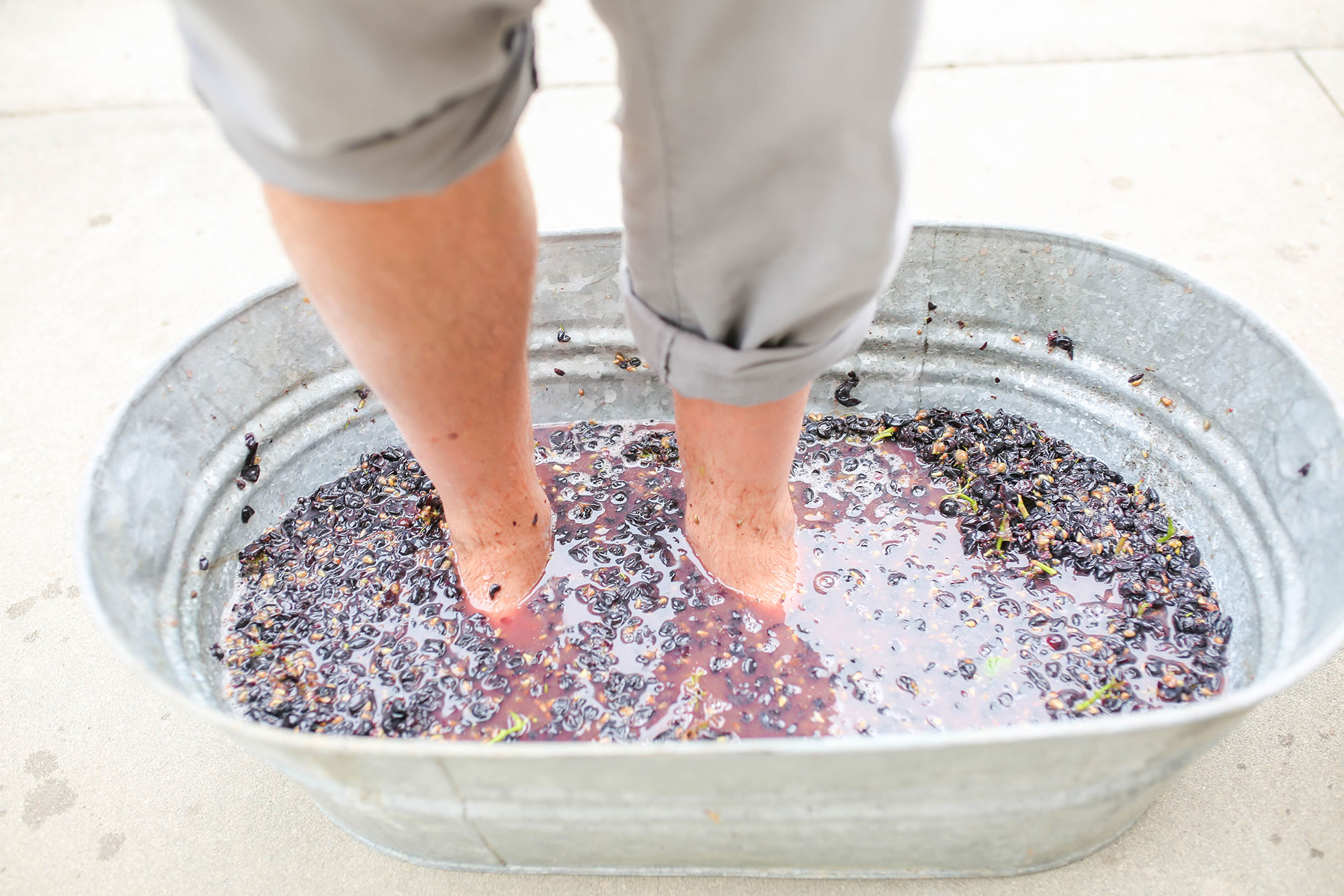 grape-stomp.jpg