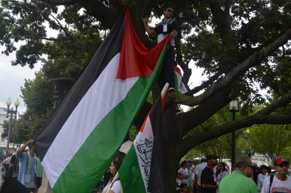 Aug. 2, 2014| A young man hangs the Palestinian Flag from a tree.