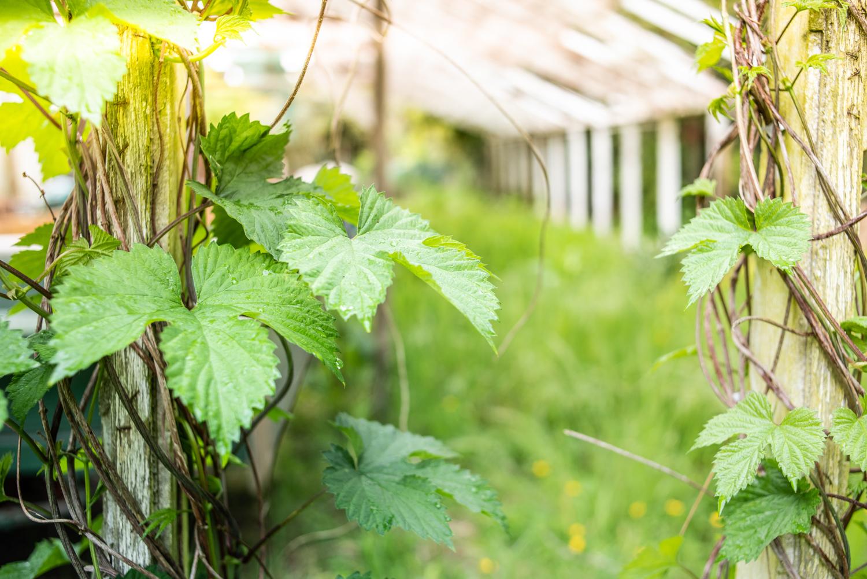 The Herbalist-4825.jpg