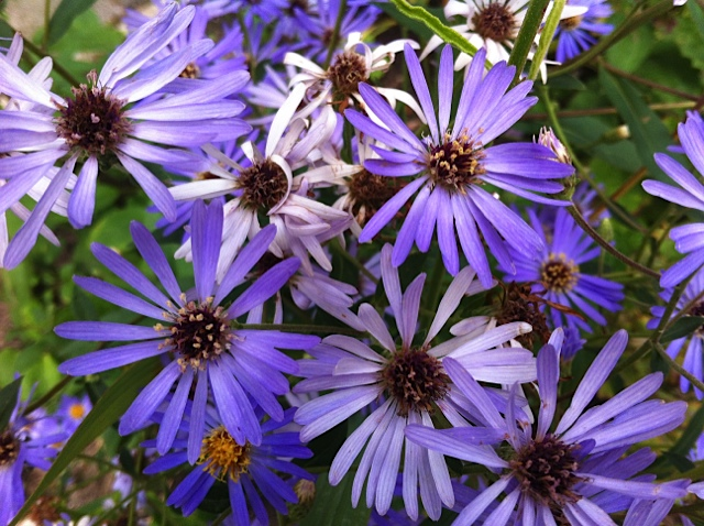 tuin-van-jan-bloemen.jpg