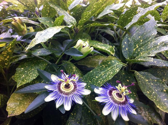 tuin-van-jan-bloemen-2-blog.jpg