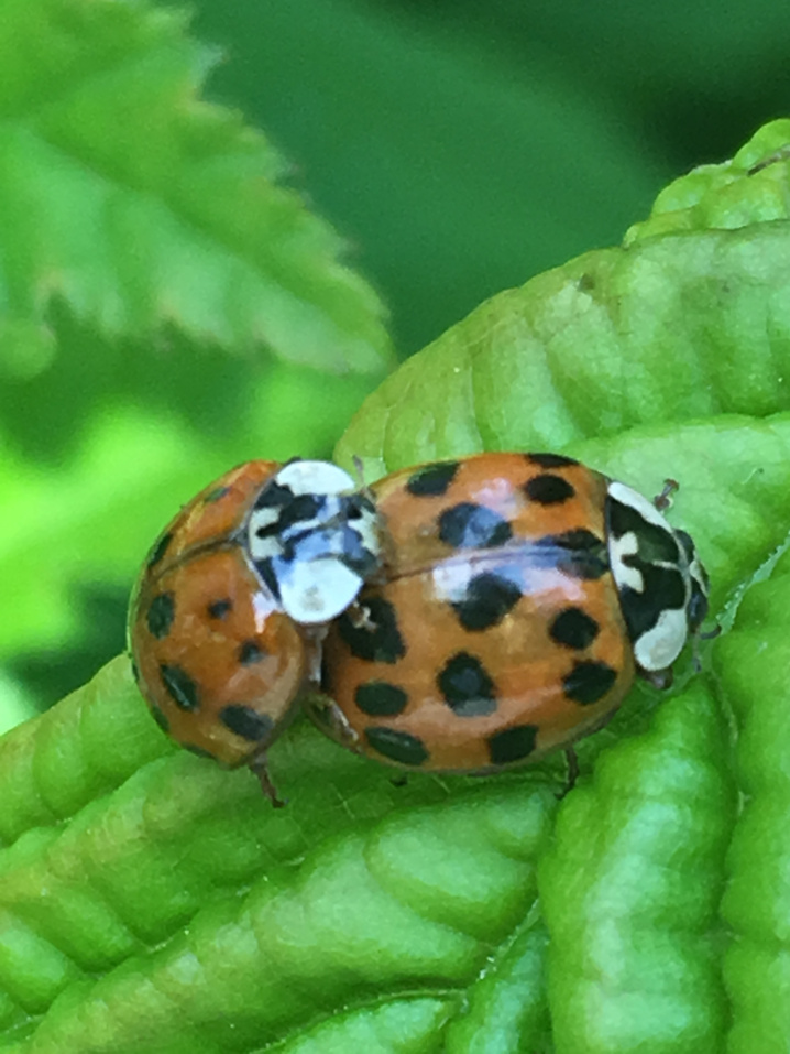 de-tuin-van-jan-ladybug-2019.jpg