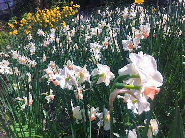 tuin-van-jan-bloemen-blog-2.jpg