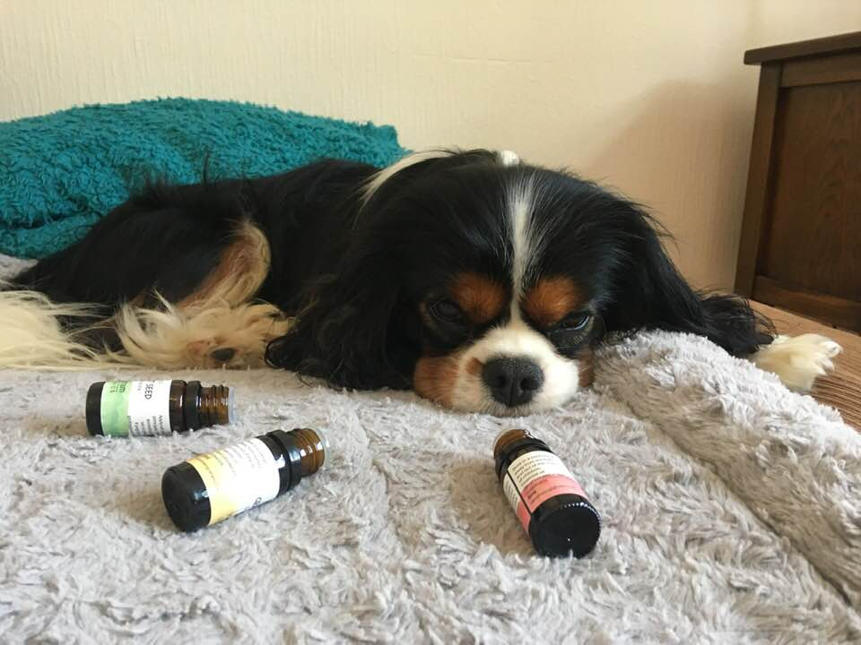 penis-infection-chilled-out-dogs-plant-remedies.jpg