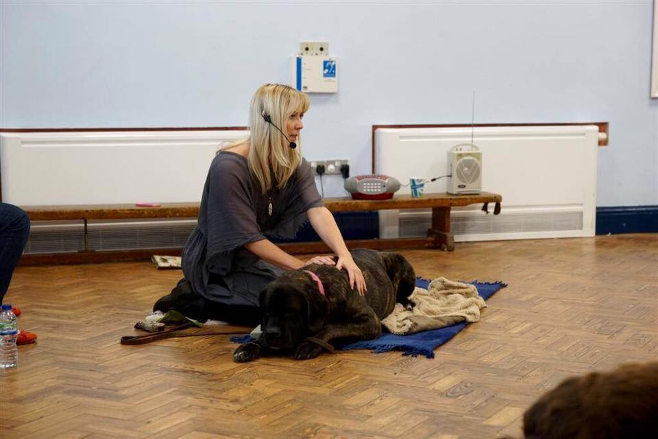 dog-massage-workshop-chilled-out-dogs-2.jpg