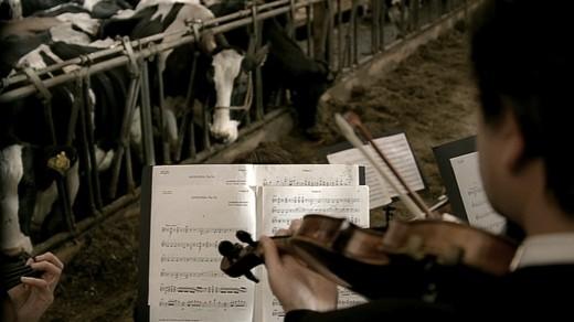 concert-milk-1-520x292.jpeg