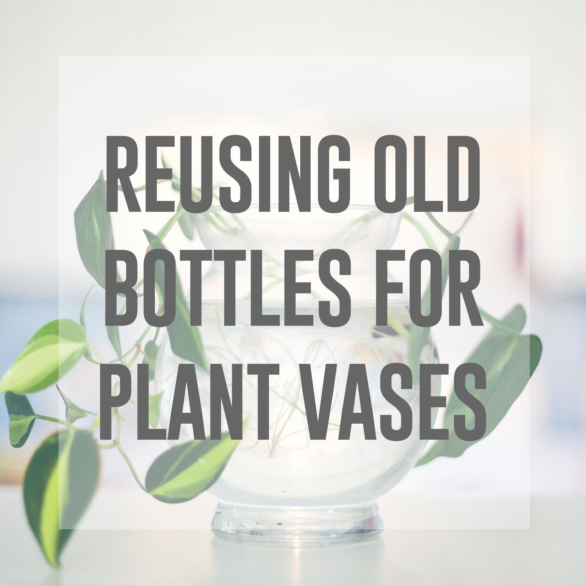 bottles-as-vases_header-image.jpg