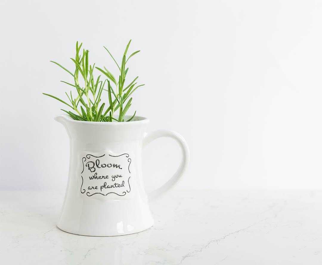 bloom-foundation-program.jpg