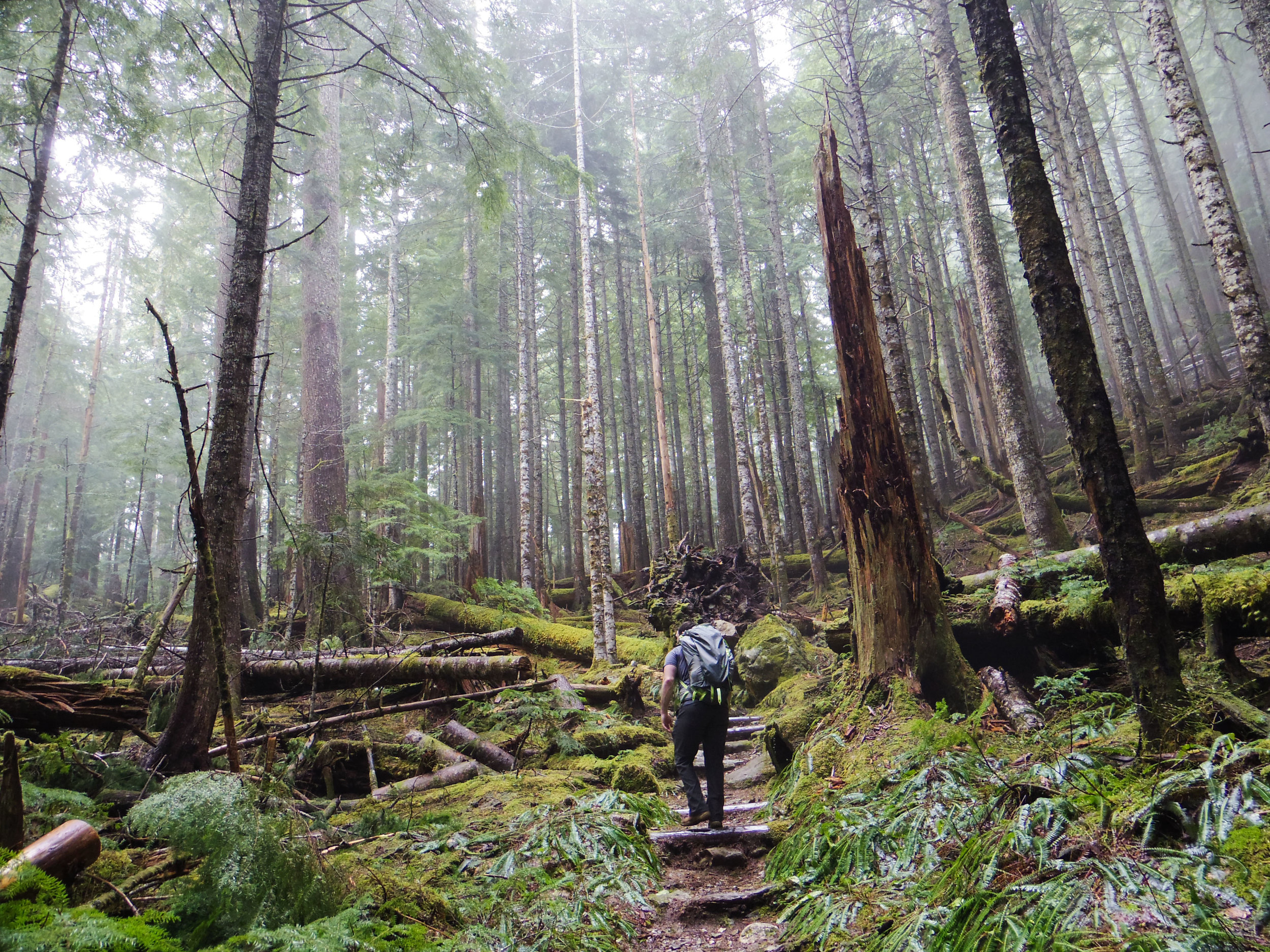Hiking in the Olympic National Forest