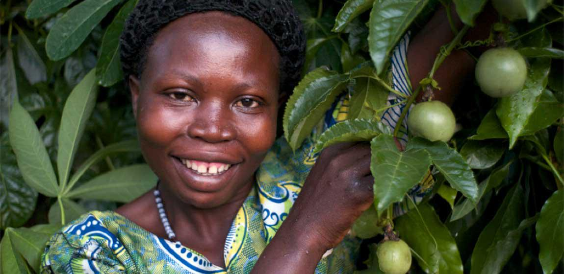 BUY FROM GIRLS - Utilizing a Hub-Spoke collection model, KadAfrica buys 100% of quality fruit at the local market price.