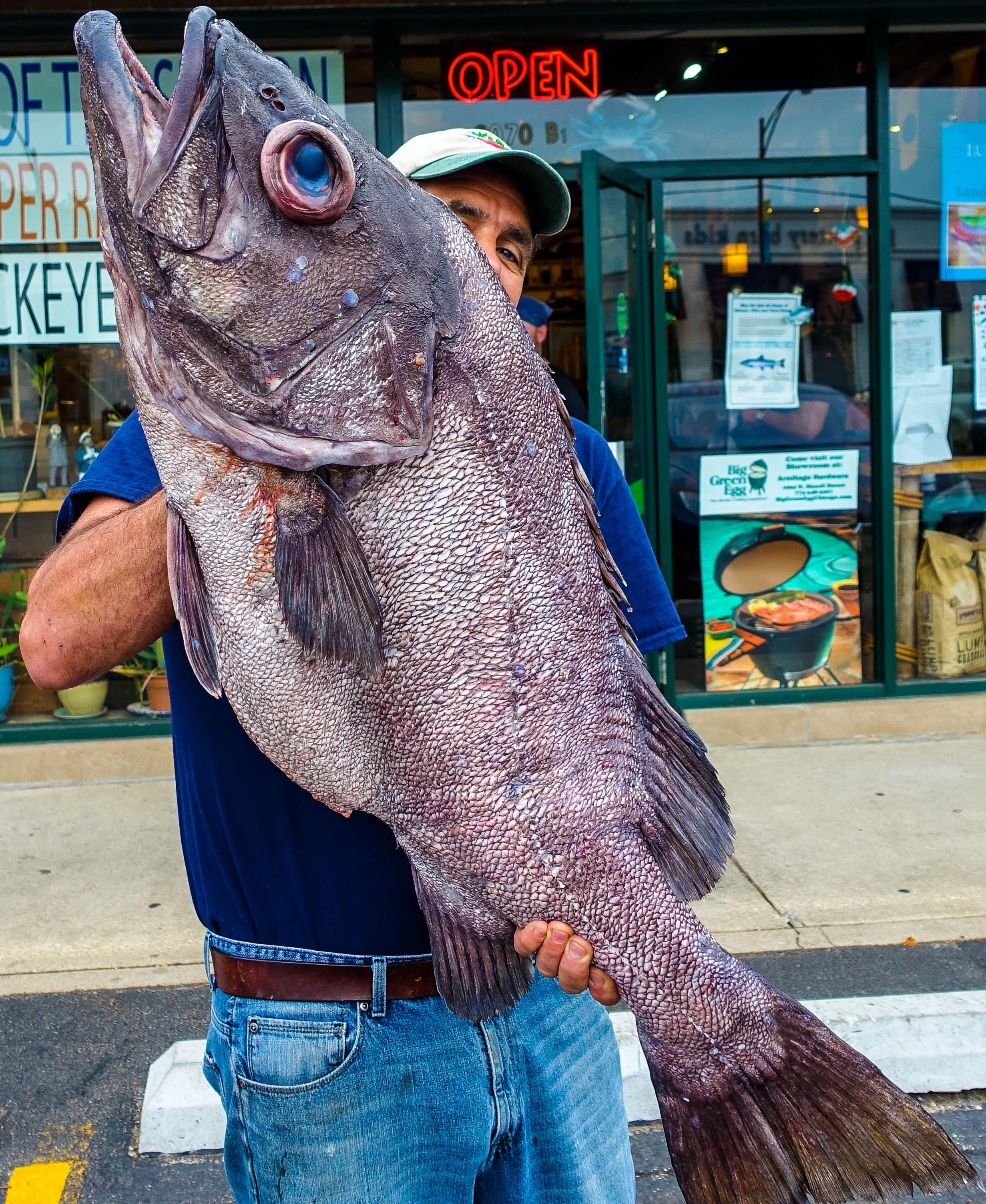 Dirk's Fish Wreckfish 1 (1 of 1).jpg
