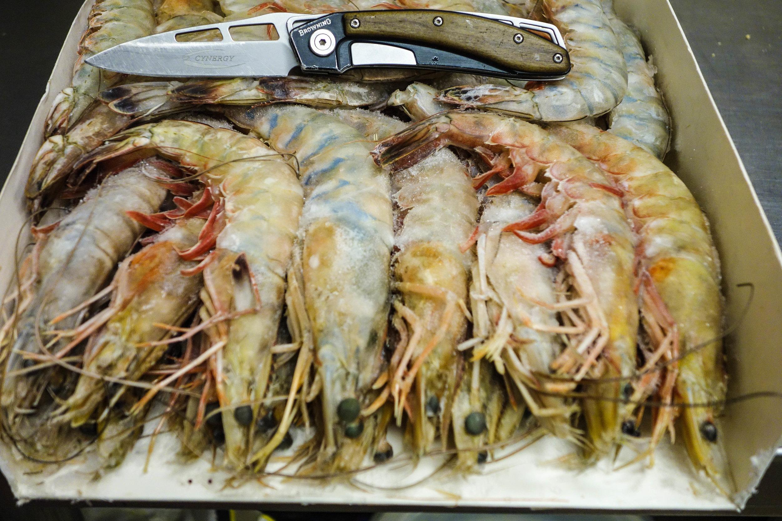 Head on Shrimp (1 of 1).jpg