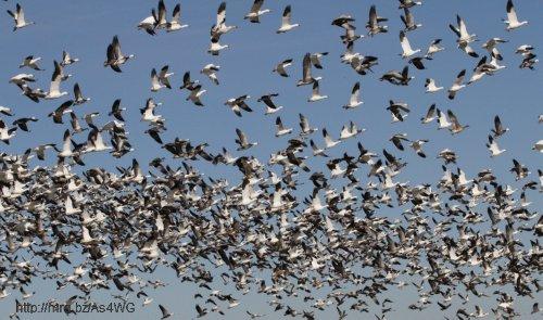 flock2.jpg