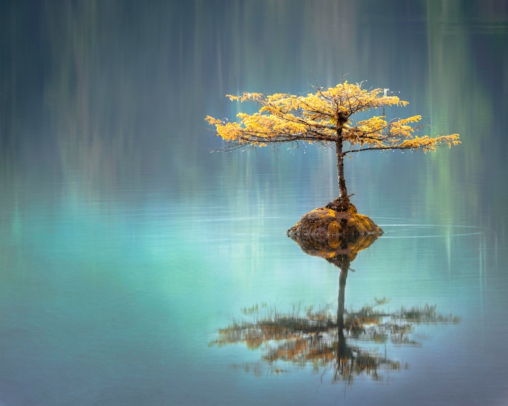 water gold tree 1000.jpg
