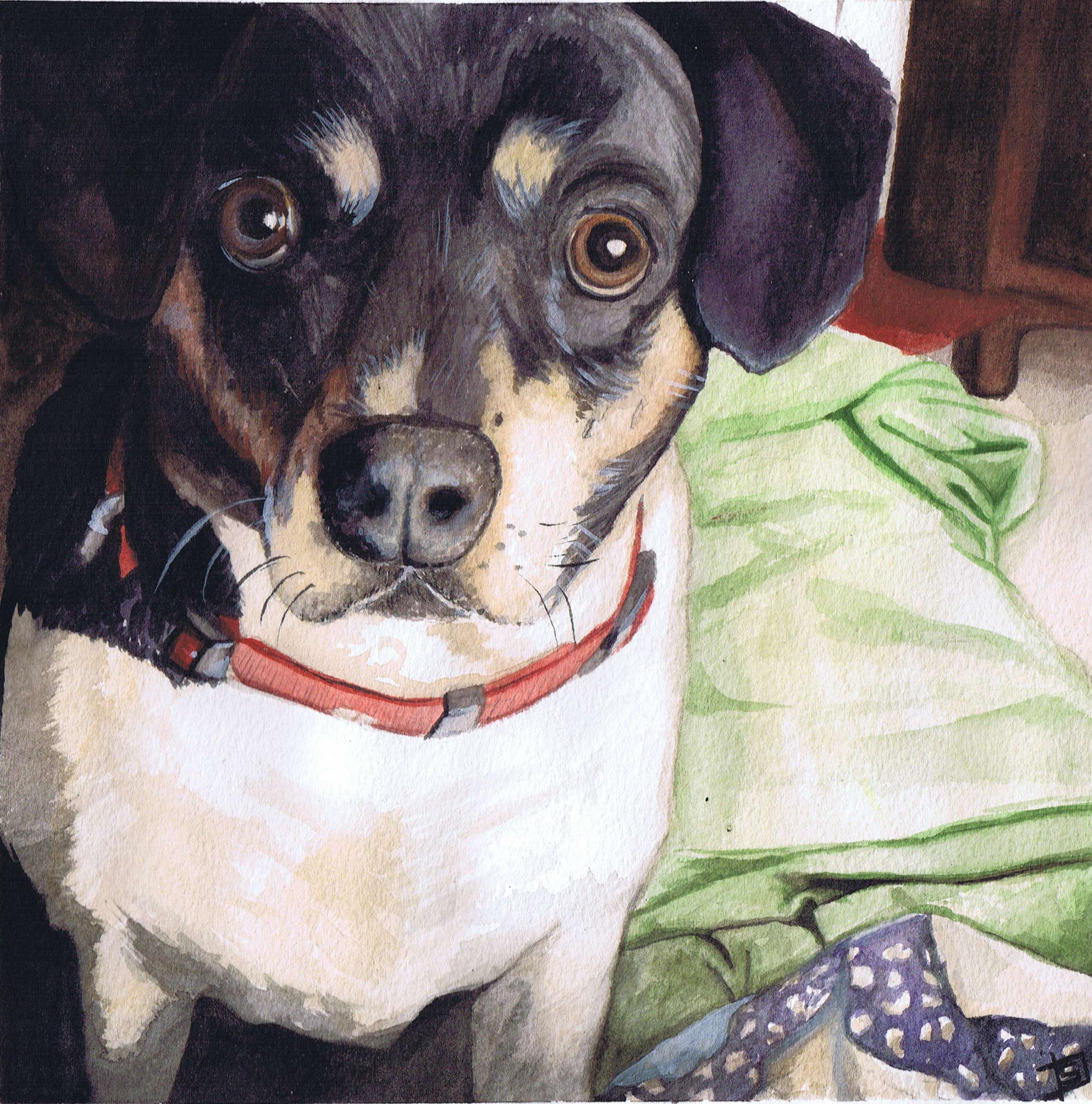 Trudy_dog2_noboarder.jpg