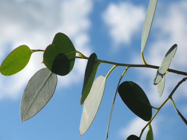 leaf-1770_640.jpg