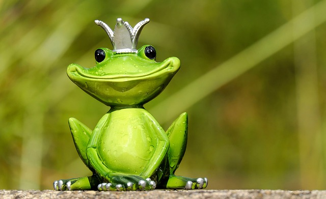 frog-2240764_640.jpg