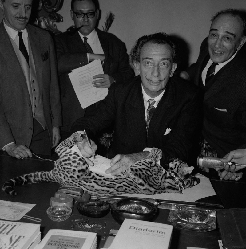 The inimitable artist Salvador Dalí is pictured here signing documents while his pet ocelot (named Baby) lies on the table before him. The ocelot is a wildcat that's typically found in the American Southwest and Mexico.