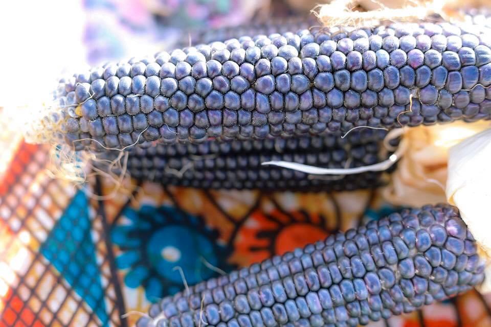 blue corn.jpg