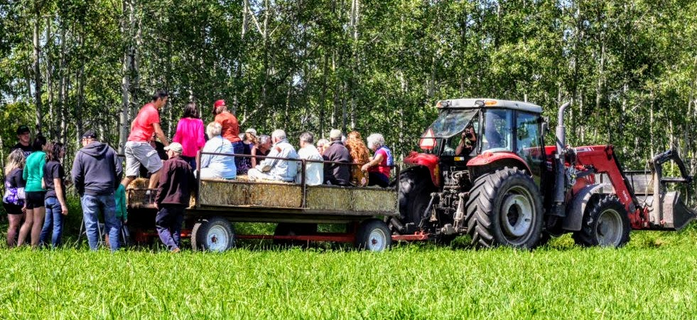 Hayride tours to see the cattle, chickens and beaver dams