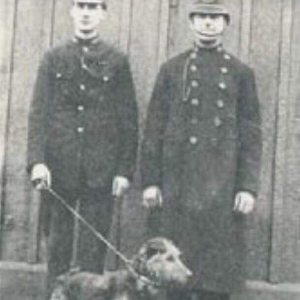 1908: Police Dogs - Police dogs were introduced to the North Eastern Railway Police at Hull Docks by Superintendent Dobie.Inspector Dobson was given the task of setting up the unit and it was Dobson who decided to use Airedale Terriers. The first 4 dogs were named Jim, Vic, Ben and Mick.Jim became quite a celebrity featuring newspaper articles at the time handled by Sergeant Allison.In the same year, the scheme was extended to Hartlepool, Tyne Docks & Middlesbrough.