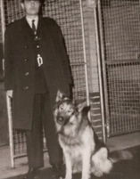 1966-1967: Growth - 1966 - The decision was made to increase Birmingham Dog Section to 3 officers.PC Donovan & PD Fritz based at Kings Cross, featured on an ITV programme highlighting the dangers associated with committing crimes on the Railway.PC Hampton & PD Boss were responsible for the excellent arrest through tracking evidence that led to the arrest of 3 people for theft of copper wire. The skills of police dogs & their handlers were being used in many beneficial areas.The Southern Alsatian Training Society held their Championship Working Trials in East Sussex under Kennel Club rules which BTP entered. They finished 2nd & competed with police dogs from 5 Home Office Forces.1967 - Ownership/Licensing use became formalised with the publication of Force General Order 245 and an allowance of £1 7s 6d was allowed for keeping a PD at home.