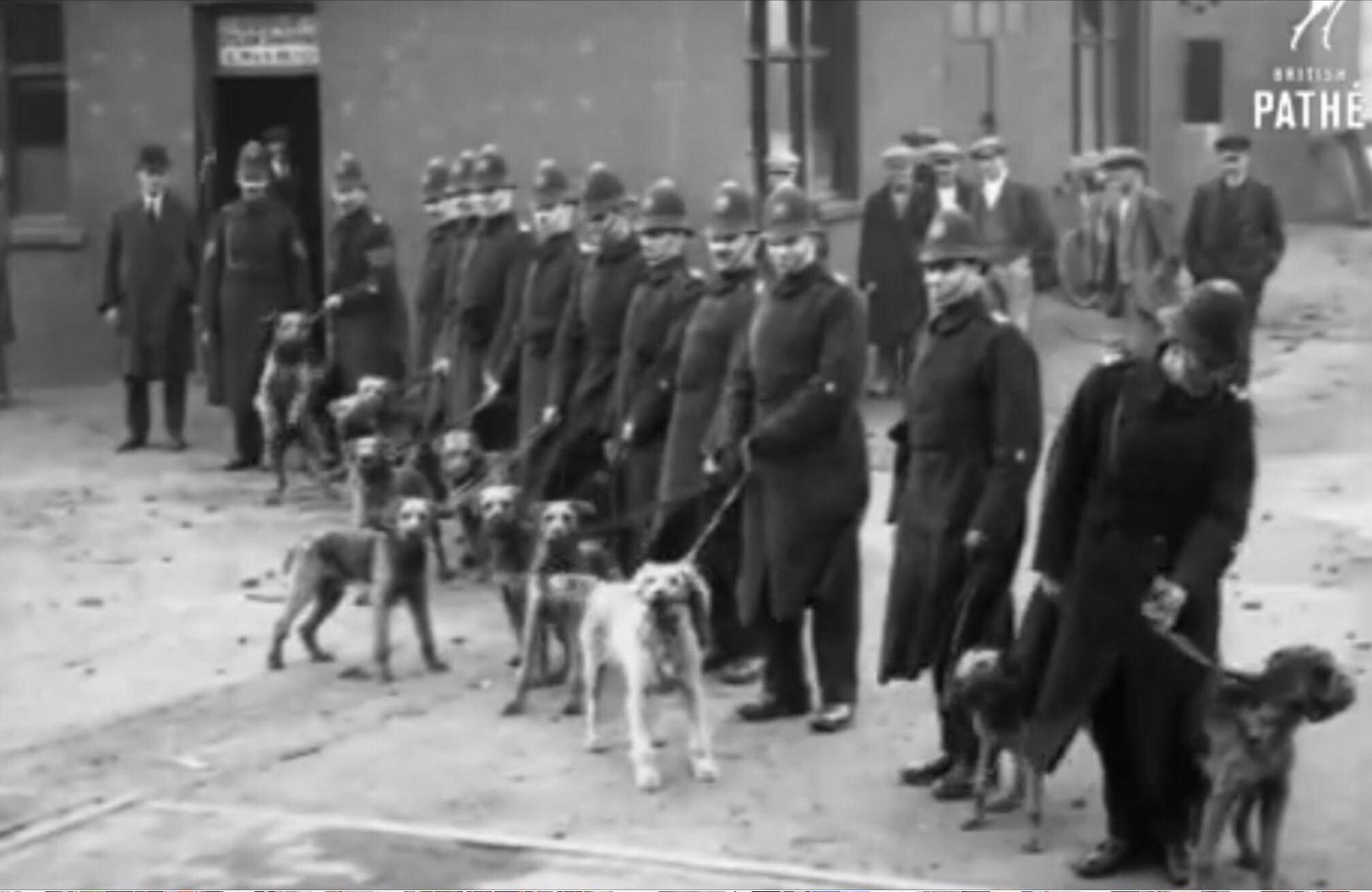 1960's-1970's: Football Crowds - 1960's/70's BTP dogs were in regular use as part of policing football crowds/disorder.