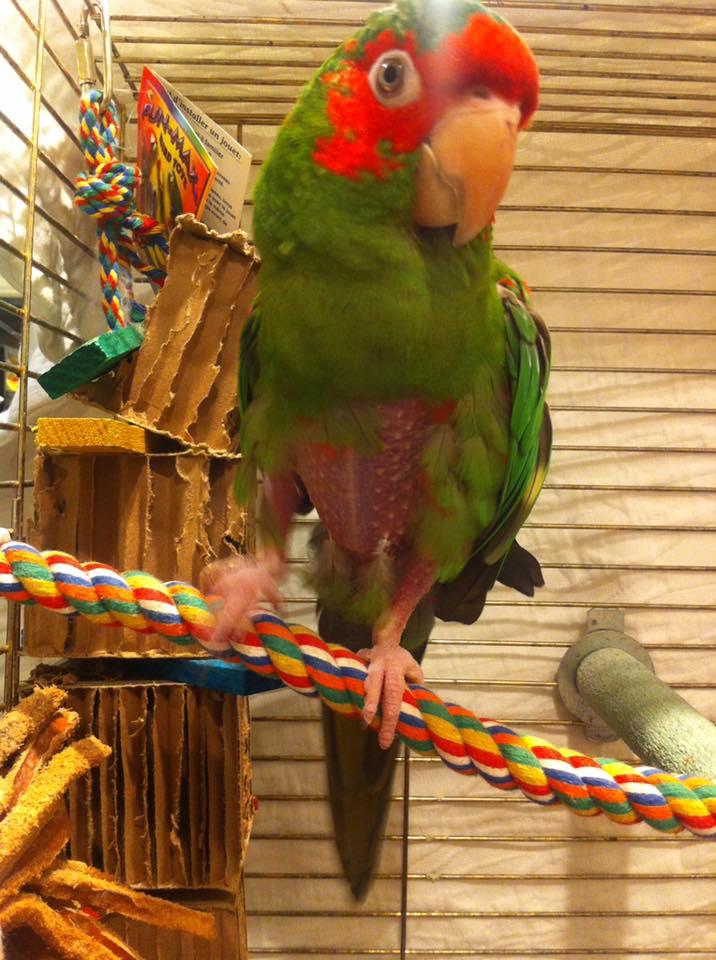parrot 1.jpg