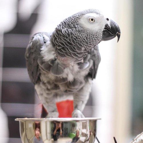 The Parrot Sanctuary