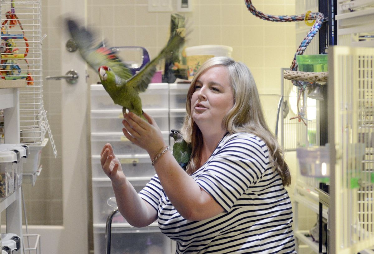 Parrot Sanctuary takes unwanted and ill-treated birds - Toronto Star