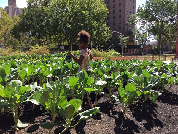 Photo: Building Healthy Communities farms at NYC public housing: partners Unilever, Green City Force. Photographer/Mayoral Photography Office.