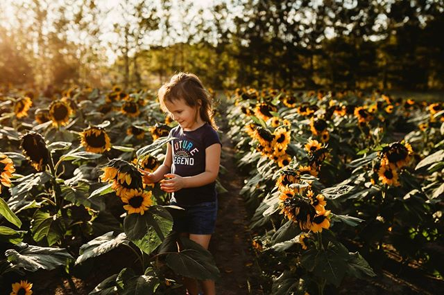 SUNFLOWER MINIS    October 20th @ 4 & 4:30pm && October 26th at 4,4:30 and 5pm ONLY.  Details... $125 15-20 min shoot time with up to 10 digital images. Options to purchase whole gallery too after the session.  Message me to book. Full booking price due at the time of booking.  www.michellelynnphotographicartist.co
