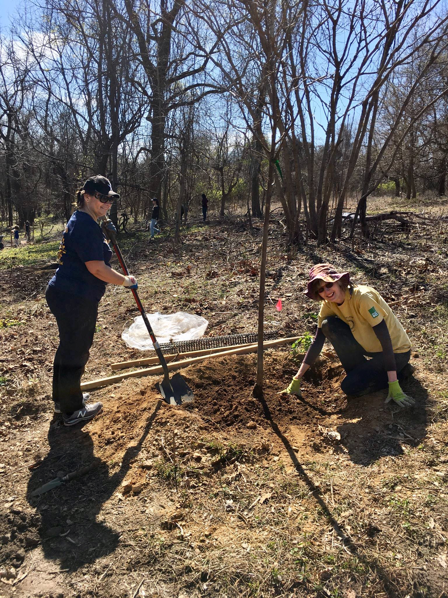Planting trees in the community orchard