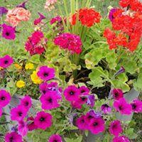 GC garden 1.jpg