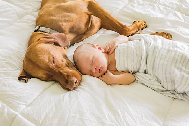 Every dog should have his own boy. 💗 🐾  #newborns #dogmom #boymom #dogsofinstagram #babiesandpuppies #cutenessoverload #doglovers #dogsofinstagram #petsandbabies #petparadise #aboysbestfriend #puppies #lifestylephotography #newbornphotography #comfycozy #mansbestfriend #safeandsound #nwi #photographer #babylove #theregion #nwiphotographer #puppylove