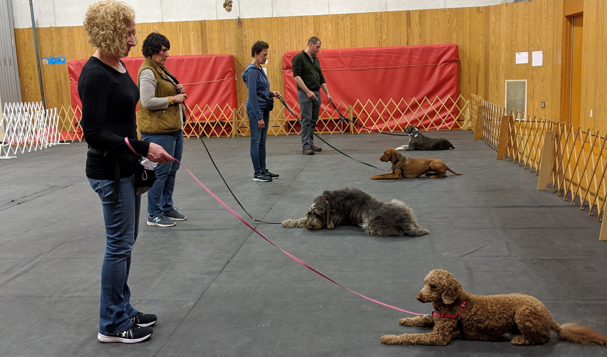 About - NEDTC is a non-profit obedience club, dedicated to the training and the development of the naturalintelligence of all dogs