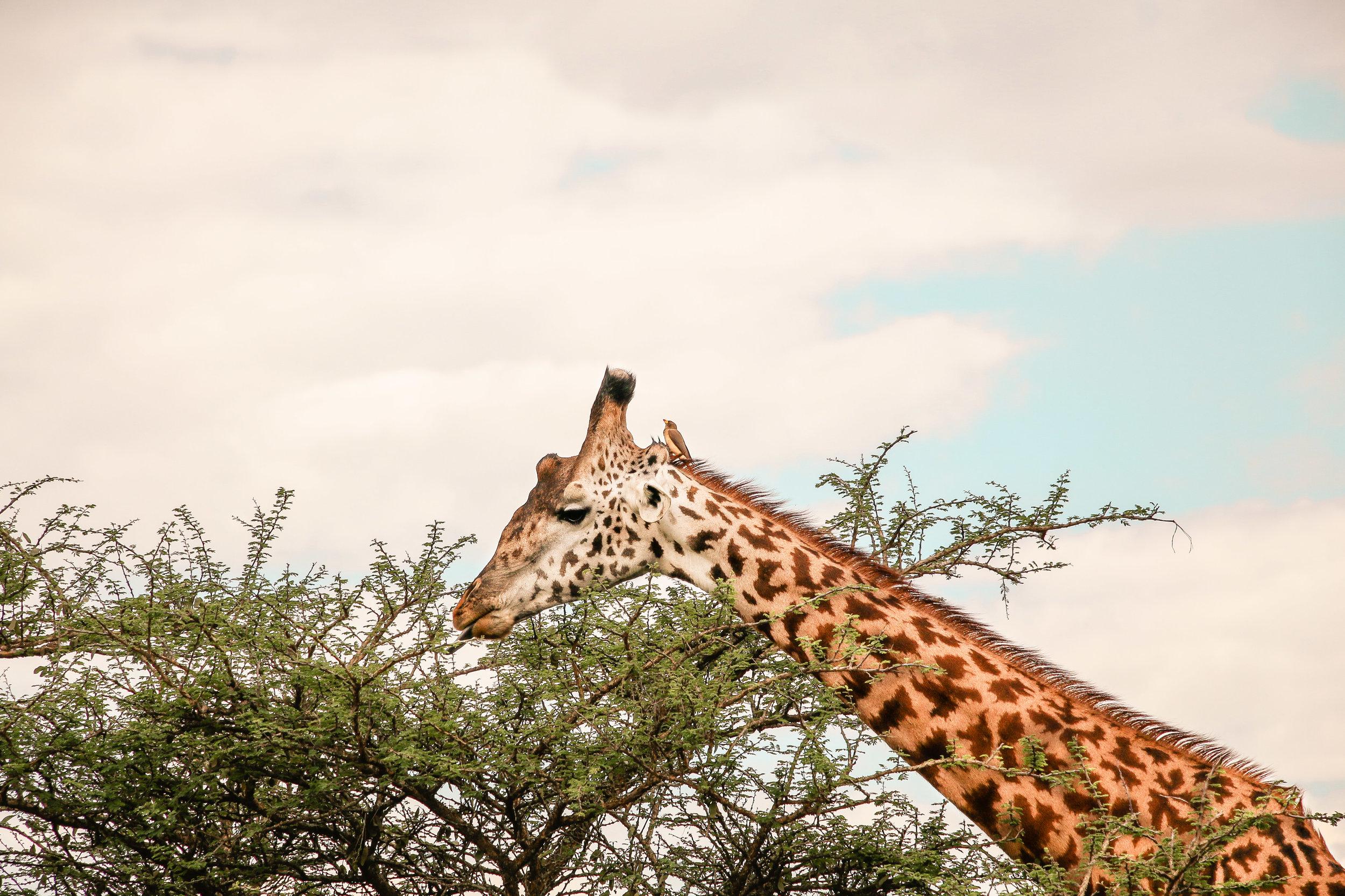 Africa2017-122.jpg