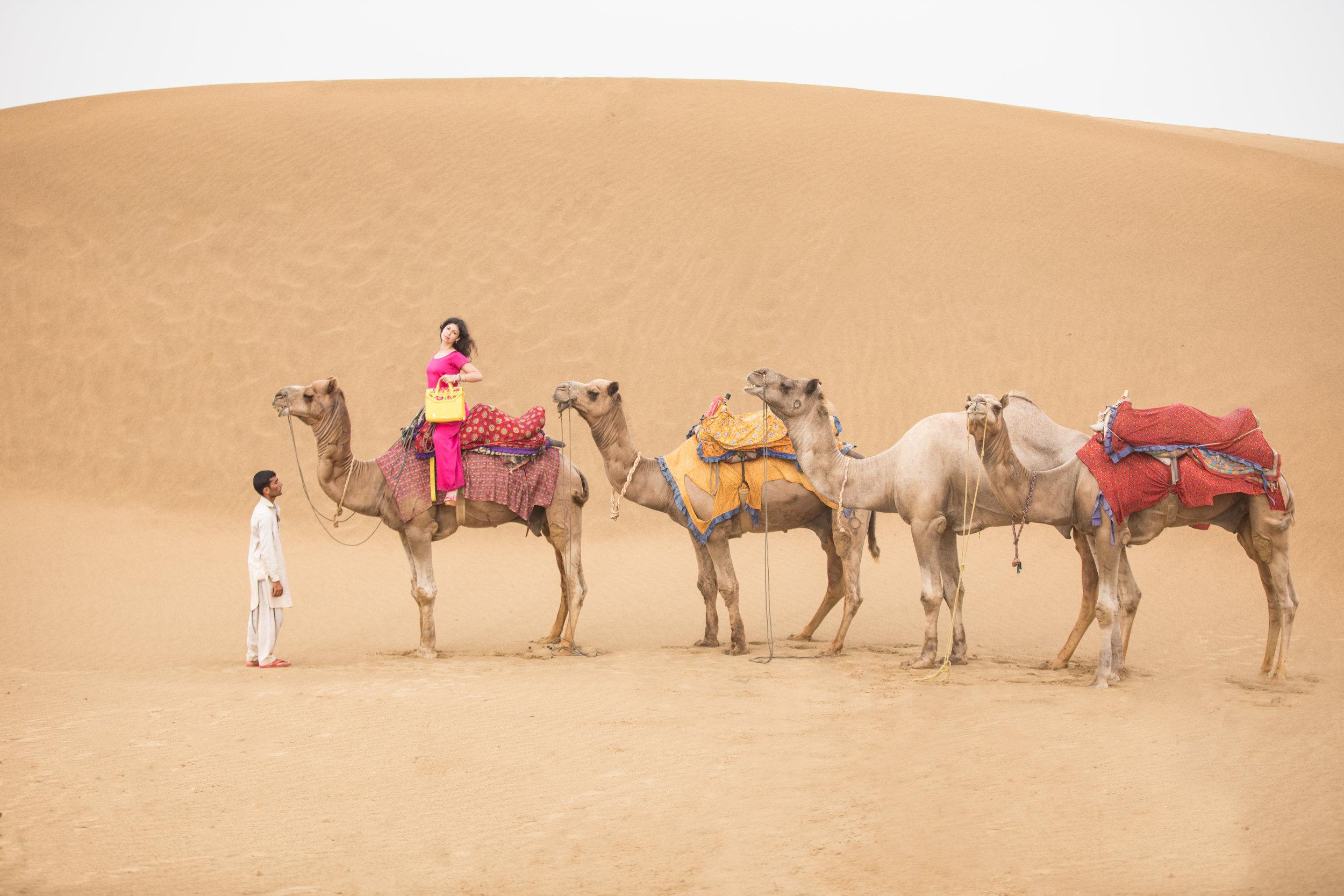 IMG_4496-Edit. Mehera Camels Lined upjpg.jpg