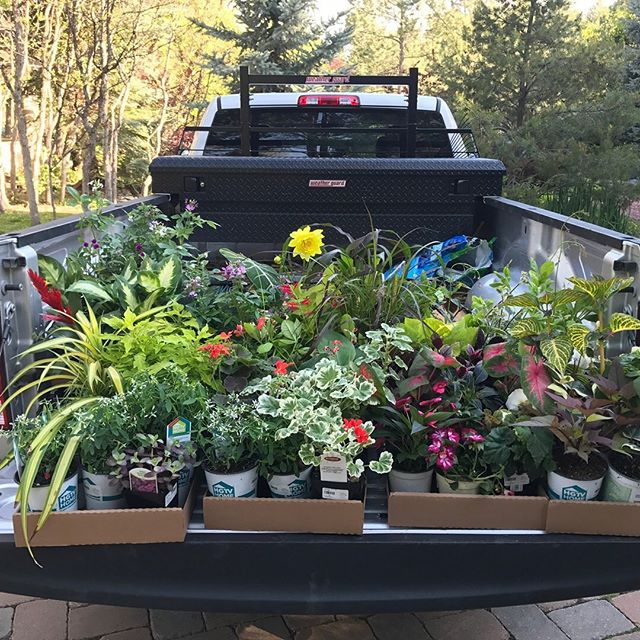 Truckload of beauty ready to be sowed in a #coloradogarden . . . . . . #gardeners #gardenersofinstagram #instagood #instaplant #plantsofinsta #plantsofinstagram #flower #flowersofinstagram #gardeninspiration #gardeninspo #green #greenthumb #landscaping